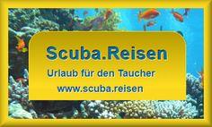 Scuba.Reisen Urlaub für den Taucher - Hotels mit (oder in der Nähe von) Tauchbasen / Divecenter Hotels, Scubas, Vacations, Traveling