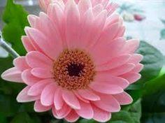 Resultado de imagen para reflexiones con flores