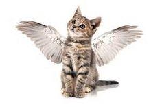 Resultados de la búsqueda de imágenes: angeles de los animales - Yahoo Search