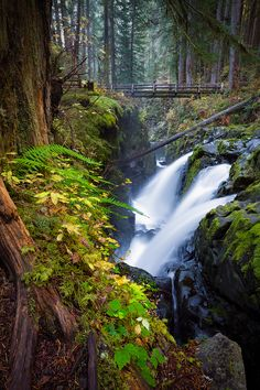 Autumn on the Sol Duc, Olympic National Park, Washington | Flickr - Photo Sharing!
