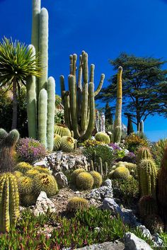 80 Stunning Rock Garden Landscaping Design Ideas - Flowers, Blossoms and Plants - Cactus Cacti And Succulents, Planting Succulents, Cactus Plants, Indoor Cactus, Cactus Art, How To Plant Cactus, Green Plants, Rock Garden Plants, Dry Garden