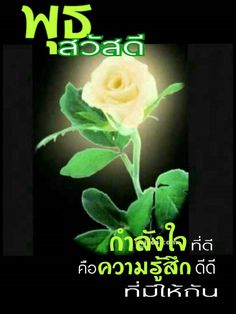 Special Flowers, Beautiful Roses, Wednesday, Plants, Nice, Random, Quotes, Quotations, Plant