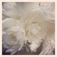 fleur en plume