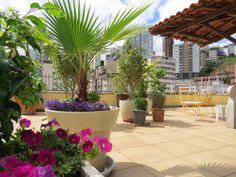 No terraço temos petúnias, lobélias, ficus, palmeira washingtônea, palmeira fenix, jaboticabeiras, congeas, lavanda e buchinhos. Rooftop garden. Jardim urbano. Urban gardening.