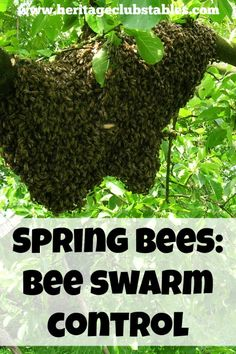 Print off this FREE printable to help you manage your hives in the spring to help prevent swarming. Bee swarm control is easy and effective.