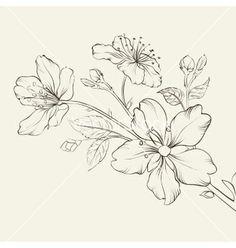 Calligraphy cherry blossom vector - by Kotkoa on VectorStock®