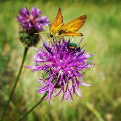 Butterfly ღ