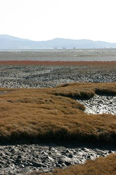 Tidal #Mudflats on and around #Ganghwa Island, Korea