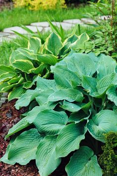 12 Shade Perennials that Will Beautify Sheltered Areas of Your Yard - Natalie Linda - - Not every flower can tolerate full sun. In fact, some will burn and wither away in hot temperatures and direct…. Long Blooming Perennials, Shade Perennials, Flowers Perennials, Shade Garden Plants, Hosta Plants, Flowers Garden, Low Maintenance Landscaping, Low Maintenance Garden, Landscaping Plants
