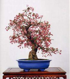 Bonsai in Bloom