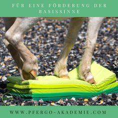Sensorische Integration beim Pferd: Förderung der Basissinne durch Pferdeergotherapie #pferde #pferdeergotherapie #clickernmitpferden #basissinne #sensorischeintegration #pferdetraining #plufsig #ikeahack