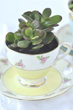 Tea Cup Succulent - your homebased mom