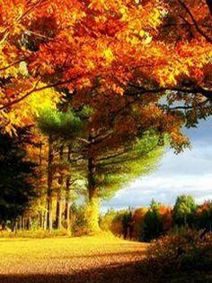 19 Best Nature images  Nature, Mobile wallpaper, Nature wallpaper