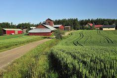 Pääjärvenmäki, Karstula.  http://www.facebook.com/MatkaMaalle  http://www.keskisuomi.net/  http://www.centralfinland.net/