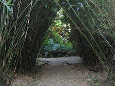 Cranbrook Garden, St.Ann, Jamaica