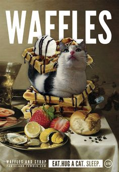 #cat #funny #breakfast #waffles #maple syrup #bacon #icecream #meow #crazycatlady #sleep #eat #junk food #fastfood #stilllife #procrastination #weekend #lazy #hug #kitchen #mealtime #mealprep #strawberies #fruits