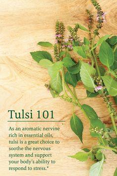 Ayurveda, Healing Herbs, Medicinal Plants, Herbal Tinctures, Herbalism, Natural Medicine, Herbal Medicine, Tulsi Plant, Tulsi Tea