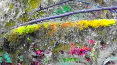 Tualitan Nature Center Nature Center, Gardens, Urban, Painting, Art, Art Background, Outdoor Gardens, Painting Art, Garden