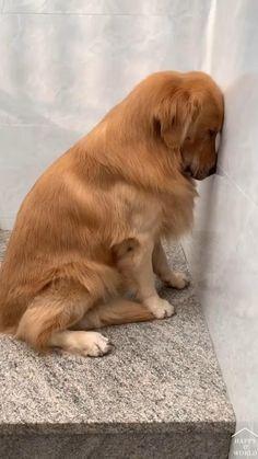 Cute Animal Photos, Cute Animal Videos, Funny Animal Pictures, Funny Dog Videos, Funny Animal Memes, Funny Dogs, Cute Little Animals, Cute Funny Animals, Pet Seat Covers