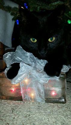 Cat eyes at Christmas