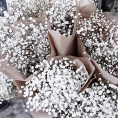 Love this baby breath! So many bouquets of flowers! Here at Packed Party we love flowers and always have them in our office! Flowers always makes the office feel homey and cheerful! My Flower, Beautiful Flowers, Flowers Nature, Beautiful Images, Small White Flowers, Brown Flowers, Beautiful Smile, Bloom, Plants Are Friends