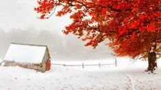 Storm Shack Tree Red Snow Leaves Early Autumn Countryside Winter Wallpaper For Desktop Background Snow Images, Tree Images, Winter Images, Fall Pictures, Pretty Pictures, Winter Weather Forecast, Free Winter Wallpaper, Winter Wallpapers, Fantastic Wallpapers