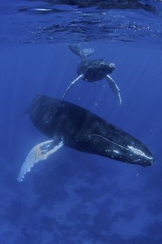 Beautifull Whales