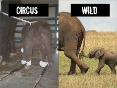 EXPOSED! Ringling Brothers and Barnam and Bailey Circus: The Cruelest Show on Earth!