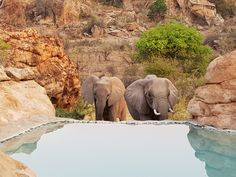 I just don't know how this absolute gem of national park is such a well kept secret. Despite it's incredible history, the park only opened to the public in I was completely fasci… Herd Of Elephants, Night Driving, Baboon, Adventure Awaits, Big Cats, The Locals, National Parks, Africa, Bucket