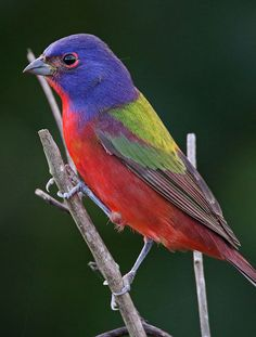 Home : BirdCast--Bird migration forecasts in real time