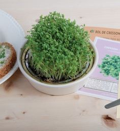 a plant that you can grow any time in the year - cress! specially good for high stress periods, as it contains a lot of vitamins
