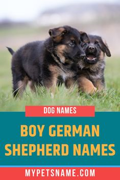 Some of our suggestions for our Boy German Shepherd names take inspiration from historical figures who have proved their determination and strength, and therefore would make exceptional monikers for German Shepherds. Check it out! Cool Dog Names Boys, Best Dog Names, Boy Names, German Shepherd Names, German Shepherds, Male Pet Names, Guide Dog, Pet Id, Determination