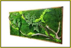 x LARGE Plant Painting®- No Care Green Wall Art. Real Preserved Plants in Reclaimed Wood Frame & Red Barked Branches Amazing! x LARGE Plant Painting- No Care Green Wall Art. Real Preserved Plants in Reclaimed Wood Frame & Red Barked Branches. Moss Wall Art, Metal Tree Wall Art, Wall Wood, Real Plants, Large Plants, Art Mural Vert, Deco Spa, Moss Plant, Green Wall Art
