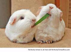Sharing is wonderful