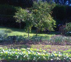 Catégorie : Jardins partagés // ©MarcD