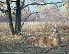 Hold Tight-Deer Painting by Jim Kasper Whitetail Deer Pictures, Deer Photos, Deer Pics, Wildlife Paintings, Wildlife Art, Deer Paintings, Original Paintings, Hunting Art, Deer Hunting