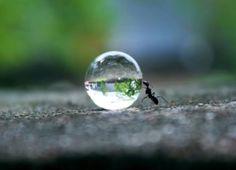 La formica e la goccia d'acqua/ the ant and the water drop