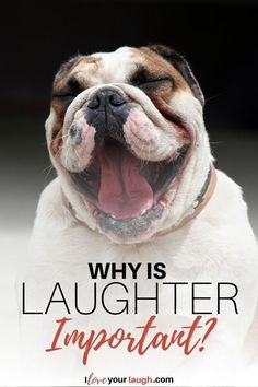 f you are asking yourself why is laughter important in a person's life, then you have come to the right place. We are going to dig deep in this post and explore many of the benefits of laughing. Plotting A Novel, Cat Nose, All In The Family, Cat Hat, Guys Be Like, Family Dogs, Humor, Laughter, Cats