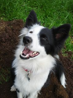 My Border Collie Lucy!
