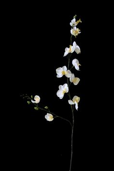 "30"" Mini Silk Phalaenopsis Orchid in Cream Yellow 