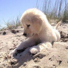 Puppy in sand!
