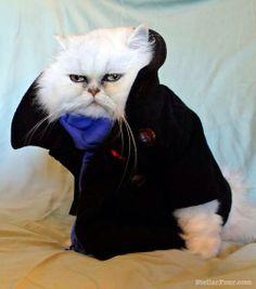 Cat dressed as Benedict Cumberbatch.