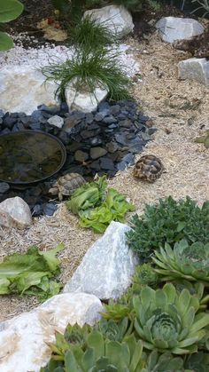Are you thinking of buying a tortoise to keep? Tortoise pet care takes some planning if you want to be. Tortoise Terrarium, Tortoise Cage, Tortoise House, Tortoise Habitat, Turtle Habitat, Baby Tortoise, Sulcata Tortoise, Tortoise Turtle, Turtle Aquarium