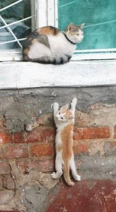 Funny cat climbing on wall.
