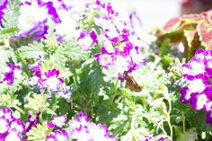 It's all in the plants, and we have a long list of plants which butterflies and hummingbirds love. If you love gardening you will want to pin this list.