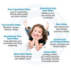 """Though I'm still not sold on """"unintegrated"""" primitive reflexes in older children, I'm still reading what I can about it. Your Body Works: Central Nervous System - Chiropractic Specialist Brisbane Norman Park"""