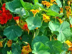 Flores Comestibles http://bittebcn.blogspot.com.es/