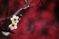 "dummy-kanji: ""Sin título por Miki Nagata (bananagranola) Por Flickr: Twitter Just started """