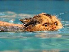 As soon as that cat gets out of the water, somebody is going to die.