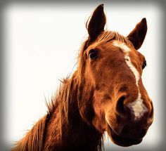 Bread may feed my body, but my horse feeds my soul - Author Unknown